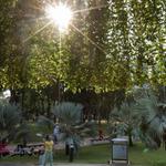 Siete razones por las que debes aumentar tu relación con las áreas verdes y los espacios públicos