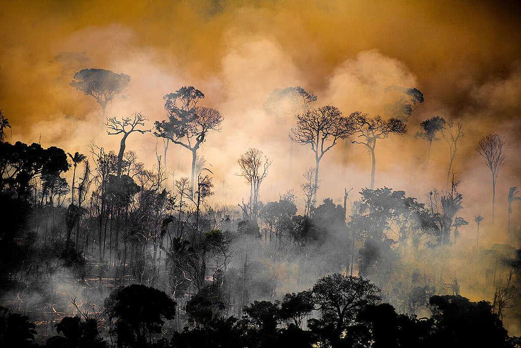El consumo sostenible o responsable tiene efectos positivos para contrarrestar los grandes daños al ambiente que provoca el cambio climático. © Christian Braga / Greenpeace.