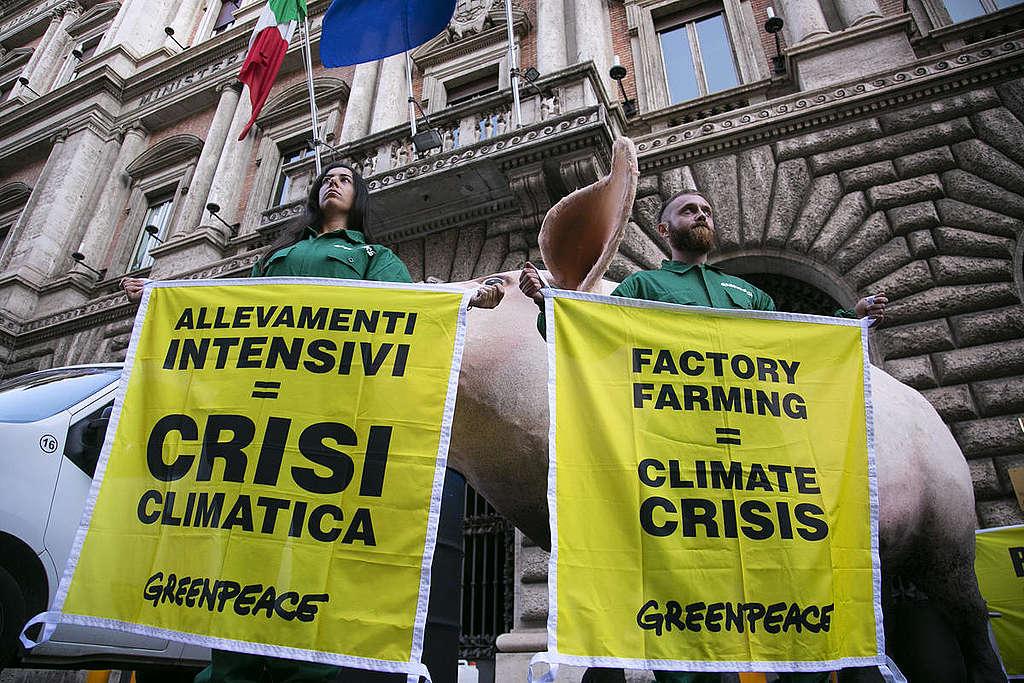 La huella de carbono generada por la producción y el consumo de carne es muy elevada. De ahí el llamado a reducir su ingesta de manera urgente. © Tommaso Galli / Greenpeace.