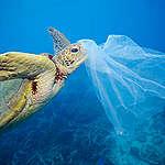 Wegwerpplastic Petitie