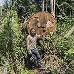 André Karipuna shows a tree illegally removed from the territory of his people, which should be protected by the Brazilian state. The Karipuna Indigenous Land, located in the municipalities of Nova Mamoré and Porto Velho, in Rondônia state, has been rapidly destroyed by the ostensive invasion of loggers and grileiros (land grabbers). Although it was recognized as an Indigenous Land by Brazilian government in 1988, over 11,000 hectares of the Amazon forest have already been destroyed; 80% in the last three years alone. Even the sale of lots has been carried out by the invaders. The Karipuna are a indigenous people of recent contact with surrounding society, and were almost extinct in the 1970s. Currently, the Karipuna population totals 58 people. André Karipuna mostra uma árvore retirada ilegalmente do território de seu povo, que deveria ser protegido pelo estado brasileiro. A Terra Indígena Karipuna, localizada nos municípios de Nova Mamoré e Porto Velho (RO), vem sendo rapidamente destruída pela ostensiva invasão de madeireiros e grileiros. Apesar de ter sido homologada pela Presidência da República em 1988, mais de 11 mil hectares de floresta amazônica já foram destruídos, sendo 80% apenas nos últimos três anos. Até mesmo a venda de lotes vem sendo realizada pelos invasores. Povo de recente contato com a sociedade envolvente, os Karipuna quase foram extintos na década de 1970. Atualmente, a população Karipuna totaliza 58 pessoas.