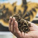 Verbeterde risicobeoordeling voor bijen, wilde bijen en hommels