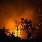 Fires burn the trees at a plantation area, in Palangkaraya city, Central Kalimantan. This year's nearly 2,000 wildfires are burning across Indonesia, this is the worst since 2015. Officials estimate that the fires have burned more than 800,000 acres.  Greenpeace criticized the government for not taking action against the companies that set fires to clear land for planting.