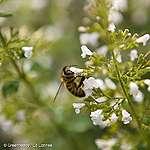 Succes voor bescherming van bijen!