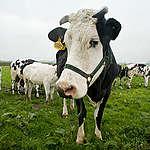 Factsheet: landbouw en coronasteun