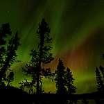 Kanada, Quebec, Borealer Wald, White Mountains,  Nachtaufnahme, Aurora Borealis, Nordlicht