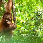 EU, bescherm de bossen!