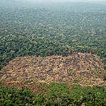 Braziliaanse ontbossing bij inheemse Karipuna in Amazonewoud aanzienlijk verminderd