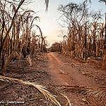 Gehakt maken van de Pantanal: rapport