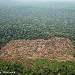 Inheemse bevolking Karipuna klaagt Braziliaanse staat aan voor toestaan landroof