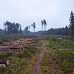 Biomassa Estland