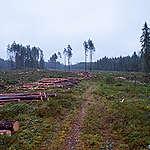 Samenvatting rapport biomassa