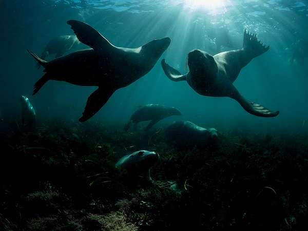 Wildlife threatened by OMV