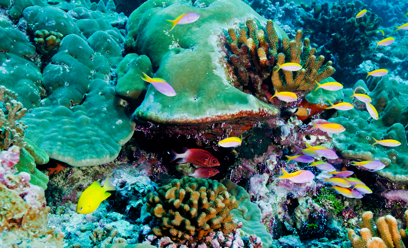 coral reefs, protect coral reefs, protect the oceans, 30 x 30, UN ocean treaty,