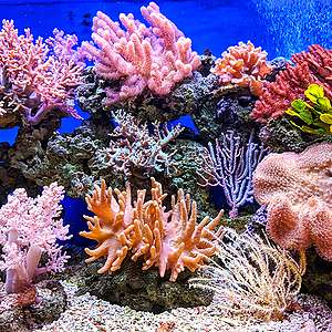 Ocean corals are vital to the health of the ecosystem