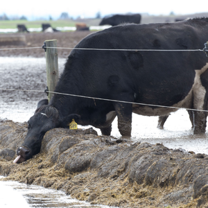 Govt must not cave to primary sector pressure on intensive grazing rules
