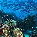 5 ting du kan gjøre for å beskytte havet