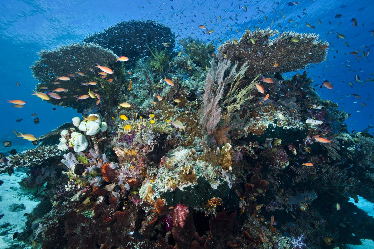 Koralrev i Papua, hvor Greenpeace har dokumentert et av verdens mest mangfoldige - og truede - havmiljøer. © Paul Hilton / Greenpeace