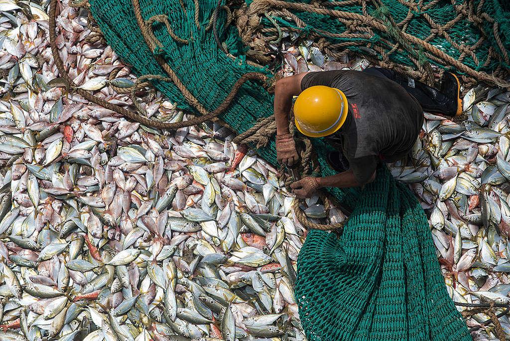 Catch on Board Chinese Fishing Vessel in Guinea. © Pierre Gleizes / Greenpeace