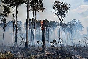 Forest Fire in the Amazon in Novo Progresso (PA). © Lucas Landau / Greenpeace