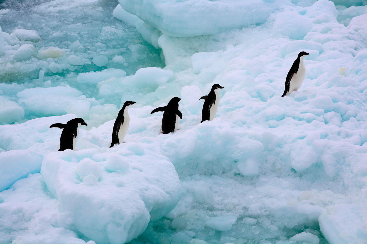 Adeli Penguins in the Southern Ocean. © Greenpeace / Jiri Rezac