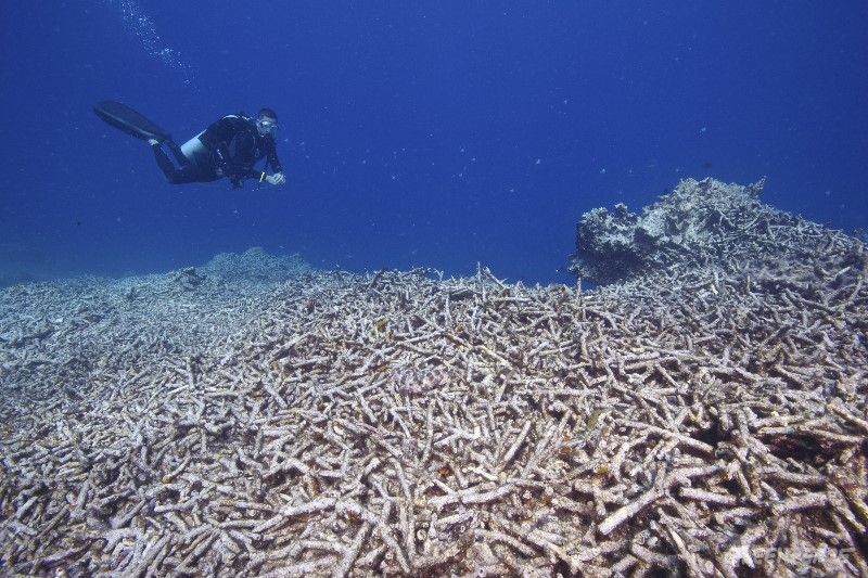 A Greenpeace diver surveys the destroyed staghorn corals of the MPA at Apo Island.