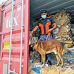 Waste trade persists because gov't not doing enough to stop it: Green groups