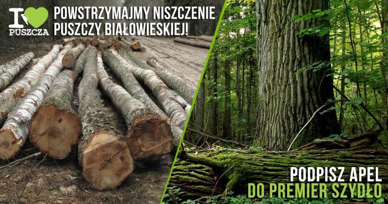 KochamPuszcze.pl