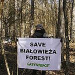 New logging in Bialowieza Forest