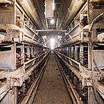 Greenpeace: stop reklamom mięsa i nabiału za publiczne pieniądze