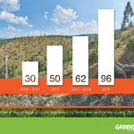 Greenpeace Romania analysis: almost 100 cases of illegal logging per day in 2015