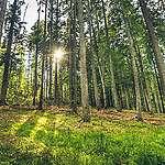 Greenpeace România lansează Forest Guardians, aplicația de mobil prin care poți salva pădurile de tăieri ilegale