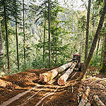 Illegal Logging in the Făgăraș Mountains in Romania. © Cristian Grecu / Greenpeace