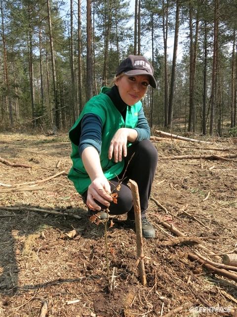 Mednarodni dan gozdov