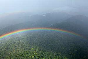 Coastal Rainforest in Cameroon. © Greenpeace / Alex Yallop