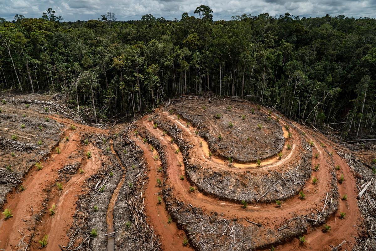 PT Megakarya Jaya Raya (PT MJR) Palm Oil Concession in Papua. © Ulet  Ifansasti / Greenpeace