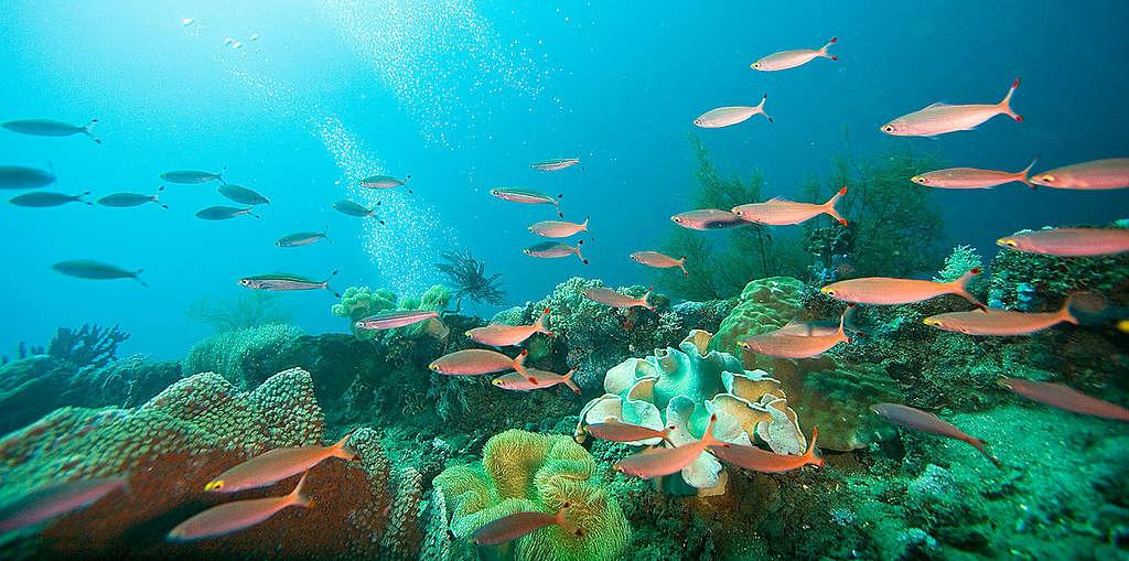 Reef and Tropical Fish in Honiara. © Greenpeace / Paul Hilton