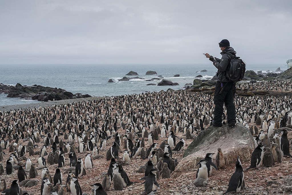 Raziskava Chinstrap pingvinov na otoku Elephant na Antarktiki. © Christian Åslund / Greenpeace