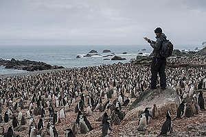 Chinstrap Penguin Survey on Elephant Island in Antarctica. © Christian Åslund / Greenpeace