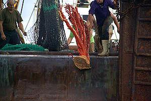Deep Sea Trawling in the Tasman Sea. © Greenpeace / Malcolm Pullman