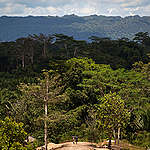 Forests in South Sorong. © Ulet  Ifansasti / Greenpeace