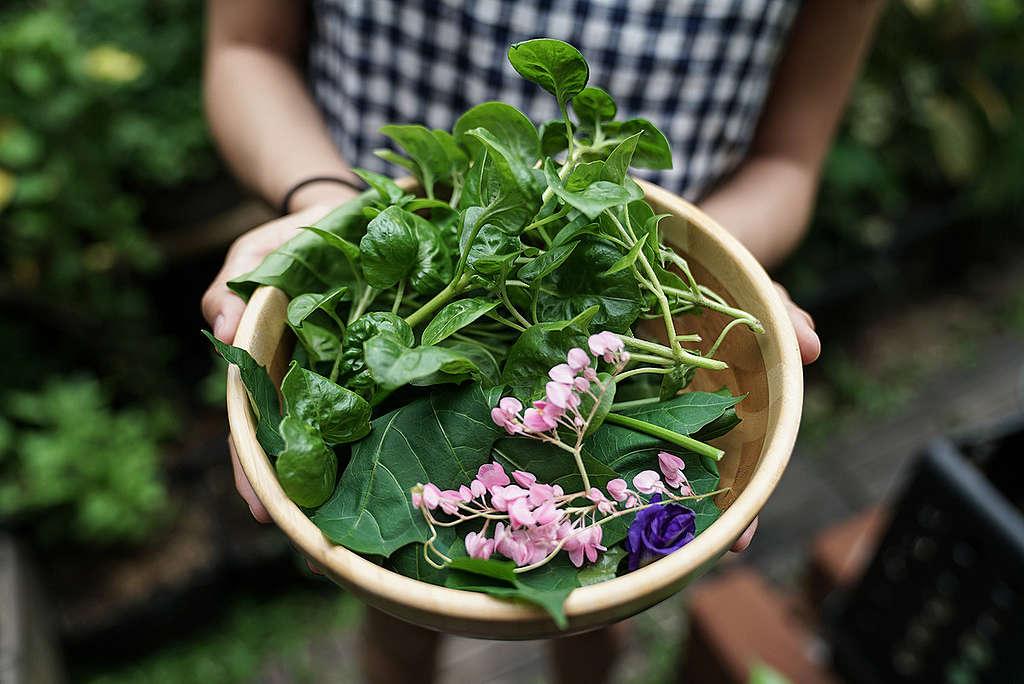 Vegetables in the Backyard in Bangkok. © Wanweaw Hongvivatana / Greenpeace
