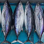 Sustainability and Justice on the High Seas: 2020 edition Southeast Asia Canned Tuna Ranking