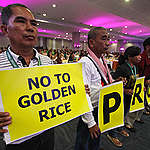 Protest against Golden Rice in Davao. © Karlos Manlupig / Greenpeace