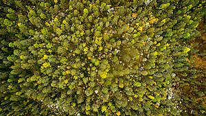 Aerial View over Forest near Lake Blecktjärnen in Sweden. © Edward Beskow / Greenpeace