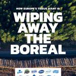 Global strålkastare på svenskt storbolag: Greenpeace International visar hur Essity exporterar skogsskövling