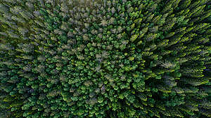 Boreal Forest in Sweden. © Christian Åslund