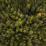 Greenpeace välkomnar EU:s nya skogsstrategi