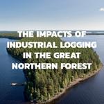 Svensk skog tillhör det skogsområde som lagrar mest kol i världen