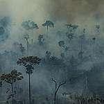 Greenpeace uppmanar McDonalds och Burger King att agera mot miljöförstörelsen i Amazonas